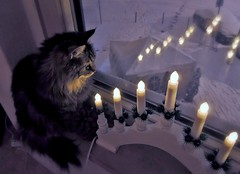 Do you see, what she's seen... (pianocats16) Tags: cat kitty cute fluffy evening night snow street lights window