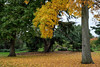 Kew Gardens (tonybill) Tags: autumn fall gardens iridientxtransformer kew kewgardens london miscellaneous places royalbotanicgardens september surrey bokeh