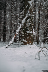 Salcey Forest (dominictucker) Tags: forest snow fujifilm fujix xt2 salcey england northamptonshire uk united kingdom