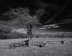 Tree and fence (Tim Ravenscroft) Tags: tree fencing landscape sky monochrome blackandwhite blackwhite blueridgemountains northcarolina hasselblad hasselbladx1d x1d