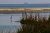 IMG_3230 (SweetMeow) Tags: harborisland sthelenaisland ocean beach cameraclub greategret