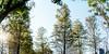 空間 ∣ 竹風青塘 (彙朗) Tags: taiwan taoyuan city interior interiorphotography architecture light atmosphere plants tree green 台灣 桃園 城市 空間設計 室內攝影 建築攝影 空間攝影 建築 光 氛圍 植物 樹 綠 台湾 シティ インテリア インテリア写真 雰囲気 木 緑 プルメリアパイン 落羽松 plumeriapine