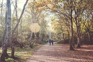 Sherwood Forest2.jpg