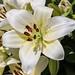 Temps de flors_0099
