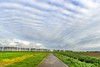 Patterns in the sky (Ellen van den Doel) Tags: grass autumn workshop natuur netherlands nature landscape overflakkee nederland basiscursus ellenvandendoel fall structure clouds goeree goederee cursus 2017 road landschap november pattern photography weg sky green windmill lucht wolken fotografie