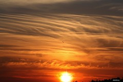 No Verão passado (antoninodias13) Tags: céu nuvens ave tons pordosol silhuetas pinhalinteriorsul aldeia verão marmeleiro sertã portugal pôrdosol