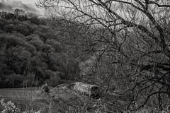 Branch line (Evoljo) Tags: train avoncliff branch track trees railway wiltshire uk nikon d500 blackwhite