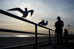 Seagulls (dtanist) Tags: nyc newyork newyorkcity new york city sony a7 konica hexanon 40mm brooklyn coney island boardwalk seagulls seagull gull gulls bird birds railing sand beach sea