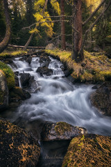 Urrezko Adina (Manuel.Martin_72) Tags: graubünden swissalps switzerland autumncolors enchanting fairytale magic forest grass rocks stones treetrump trees woods cascade river water waterfall cloudy glow morning sunrise goldensplendor autumnseason ch
