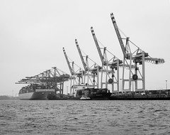 Container Terminal Tollerort (Danyel B. Photography) Tags: container terminal hamburg hafen port city street water sea sky bw sw black white schwarz weis trip crane heavy duty ship schiff