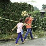 New Brooms thumbnail