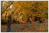 Les âges de la vie (Jean-Marie Lison) Tags: eos80d bruxelles parcastrid automne chemin promeneur anderlecht