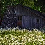 Barn with Daisies (North Cascades National Park Service Complex) thumbnail
