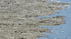 Incoming Tide (morroelsie) Tags: hightide incomingtide morrobay morrobayharbor morrobayestuary centralcoast morroelsie