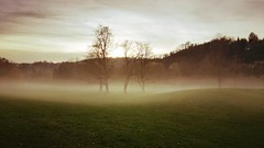 Beautiful creepiness (DrQ_Emilian) Tags: nature outdoors fog foggy mist misty sunset evening sundown park trees sky clouds cold november fall autumn weather maxeythsee stuttgart badenwürttemberg germany europe travel wanderlust light color mood creepy spooky smartphone