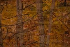 Colores de Otoño (11) (Soleil Belice) Tags: otoño murcia parque hojas ardilla