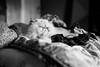 Horace on the bed (tercrossman87) Tags: canon 7 ilford hp5 400 1600 push ilfotec lc29 119 film home development plustek 8200i 50mm 18
