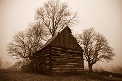 DSC_9320 (tintyper) Tags: tobaccobarn abandoned gone bw blackandwhite sepia logcabin cabin barn