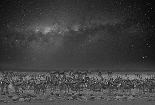 At night by the waterhole