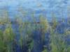 les roseaux. Au fil de l'eau...au gré du vent. (laurent gayte) Tags: manosque ahp france laurentgayte olympusvisionary eau lac roseaux