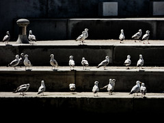 Mating Season (Steve Taylor (Photography)) Tags: bird gull seagull architecture steps contrast stark uk gb england greatbritain unitedkingdom margate shadow sunny sunshine seaside