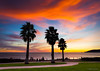 Sunset And Palms (Mimi Ditchie) Tags: pacificocean ocean palmtrees palms pathway silhouettes sunset clouds pinkclouds dramaticclouds threepalms sidewalk walkway shellbeach avilabeach shellbeachcalifornia getty gettyimages mimiditchie mimiditchiephotography
