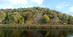 Autumn Reflections, Caledonian Canal, Inverness, Nov 2017 (allanmaciver) Tags: autumn reflections water caledonian canal inverness highlands trees shades colour shadows different variety blue sky sunshine quiet stll allanmaciver