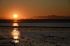 Dehesa de Abajo. (Nina Scotta) Tags: nature poblado luz aves dehesa marismas sigma reflejos frío sol colors sunrise cielo agua camposdearroz amanecer