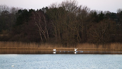Lake (Frank Schmidt) Tags: fulge birds eos7d outdoor out photo photography picture photos animals denmark day foto farver nature b lake sø