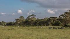 Nairobi-Nationalpark-8136 (ovg2012) Tags: kenia kenya nairobi nairobinationalpark
