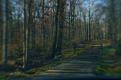 The Gate Was A Gentle Warning (MPnormaleye) Tags: seeinanewway 35mm lensbaby selectivefocus softfocus blur barrier utata path road countryside rural forest woods gate