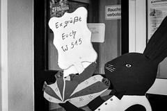 W 515 (chipsmitmayo) Tags: minolta xd7 rokkor 50mm f14 kodak trix 400 film analog labor schwarzweiss blackandwhite sauerland fleckenberg schmallenberg hsk hasen show ausstellung halle preise treffen wettbewerb bunnies rabbit pokal