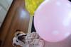 Olaf want the balloons (charmainesenaphotography) Tags: balloons colors fuji film astia dogs puppies bulldogs pets animals cute smushface bullies englishbulldogs englishbulldog olaf