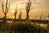 sunrise (paolotrapella) Tags: sunrise natura light luce verde canoneos erba green enagra