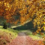 Late autumn sunshine (explored 21/11/17) thumbnail