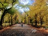 The Mall and Literary Walk Central Park Autumn in NY (dannydalypix) Tags: manhattan newyorkcity nyc centralpark themallandliterarywalk cheers