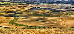 Palouse Harvest Gold (Philip Kuntz) Tags: palouse steptoebutte farming farmland grains agriculture easternwashington pullman washington