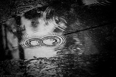 When nature gives you lottery numbers... (The Frustrated Photog (Anthony) ADPphotography) Tags: bedfordshire category england luton places rain rainwater raindrops rainy ripples puddles mono monochrome blackandwhite whiteandblack be pavement paving concrete naturalpattern patterns circles numbers reflections canon70d canon sigma105mmmacro outdoor wet water badweather