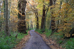 Road to nowhere (Johan Moerbeek) Tags: heiloo heilooerbos herfst autumn bos woods trees road bospad noordholland natuur