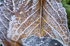 Frosted (Ian C Sanderson) Tags: leaf leaves frost ice winter cold nature d7200 macro closeup dof nikon nikkor 40mm bokeh photography flickr explore