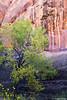 Start of Fall in Canyon Country (isaac.borrego) Tags: canyon desert coyotegulch glencanyon nationalrecreationarea escalante utah canonrebelt4i