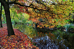 Autumn colours (natureloving) Tags: autumn fall nature tree river mapletree automne natureloving nikon d90 nikonafsdxnikkor18300mmf3563gedvr reflections