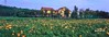 小黃屋(film) (sam9114) Tags: 小黃屋film linhof technorama 617s ⅲ schneider super angulon 90mm56 xl fujifilm rvp50 panorama panoramic photography panoramico landscape linhof617 medium 120film