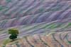 toscana4R-15 (Stanislav Don Simon) Tags: agro castle cloud fog italy sky sunrise sunset true tuscany деревня дерево закат замок италия небо облака пашня поле рассвет тоскана