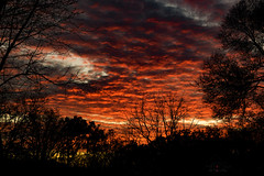 ... sky on fire (mariola aga) Tags: evening dusk sunset sky clouds trees red fiery fire silhouettes window view neighborhood coth alittlebeauty coth5 saariysqualitypictures