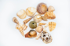 Sea Shell Collection isolated on white (wuestenigel) Tags: cutout souvenir cut knockout background sea closeup beach macro echinoderm life style isolated shape white single seashell shell season red light nature decoration aquatic one empty vintage stilllifephoto indoor ocean decor oceanic wildlife studio romantic scallop gift spa object out nobody europe marine stilllife