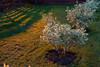 Кустарники (Девелоперская компания) Tags: паутина свет теплыйсвет кустарники магия магическийсвет мягкиетона пастель озеленение зеленый оранжевый желтый боке web light warmlight bushes magic magiclight softtones pastel landscaping green orange yellow bokeh
