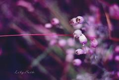 - (-LilyBeth) Tags: nature natura nikon d3000 dof depthoffield wonderfulworld bokeh 50mm