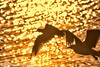 Godwit and Seagull at Sunrise (BobHartmannPhotography) Tags: 500pxb landscape swr birds audobon bobhartmanncom bobhartmann bobhartmannphotography wildlife wwwbobhartmanncom c2017bobhartmann everglades wl 365 1365 bobhartmannphotographer fl usa