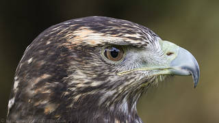 Birds of Prey - part 1